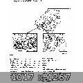 44894.jpg